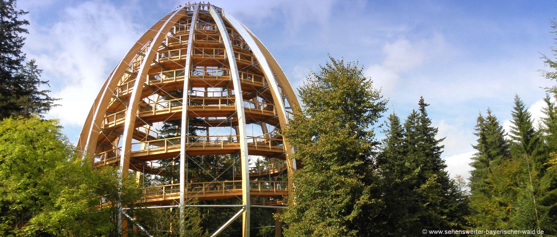 ausflugsziele-bayerischer-wald-baumkronenweg-nationalpark