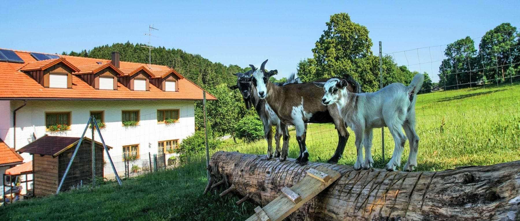 Ferienwohnungen Schauberger